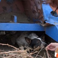【感動映像】1年間ゴミ箱で生活している捨て犬を救出する感動ムービー