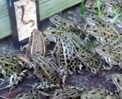 【おもしろ】池の近くでミミズの動画を再生したスマホを置いた結果・・・w