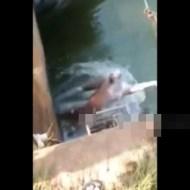 【閲覧注意】川に浮いてる溺死体の引き揚げ方が乱暴すぎるw