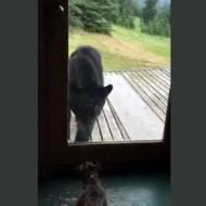 【衝撃映像】熊VS猫 本気出したねこ強すぎるwww