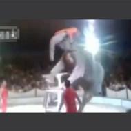 【事故映像】サーカスの象でも失敗することあるんだなw ※動画有り