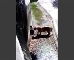 【超閲覧注意】トラの柵中に飛び込んだ男が食べられるまでの一部始終