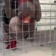 【閲覧注意】中国で凶暴な未確認生物が発見される・・・
