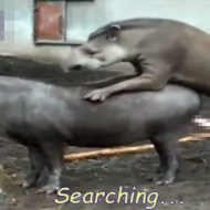 【エログロ】色んな動物のガチセックスを集めてみましたwww