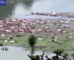 【閲覧注意】中国の洪水で村水没・・・浮いてきたのは大量の死体