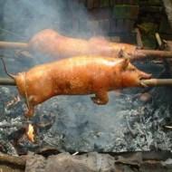 【グロ注意】生きたまま豚を火にぶち込んで丸焼きにしてみたwww