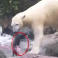 【動物グロ】ネコと遊ぶホッキョクグマ クマさんがすごく楽しそうwww