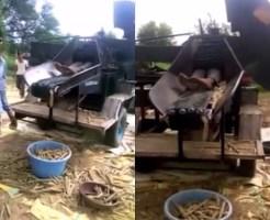 【グロ注意】トウモロコシ収穫機に収穫されちゃった男性の末路・・・