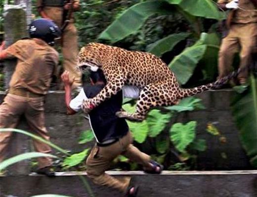 【閲覧注意】学校に豹(ヒョウ)が進入して生徒に襲い掛かる一部始終・・・