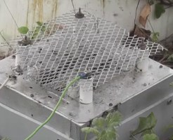 【衝撃映像】スズメバチの巣入り口に電気網トラップ設置した結果w