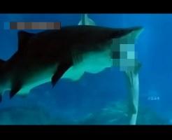 【閲覧注意】水族館でサメがサメを丸呑みしてるんだけど・・・