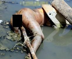 【レ○プ殺人】犯され殺された後マ○コに木ブチ込まれた死体がこれ・・・