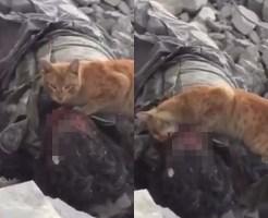 【閲覧注意】猫が死んだ人間の目玉おいしそうに食べてる件・・・