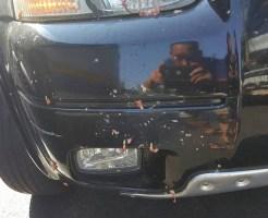 【グロ画像】人を轢き殺した直後の車のボディにいっぱい付着してグロいことになってる・・・ ※閲覧注意