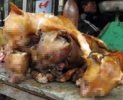 【閲覧注意】ベトナムの奥地の市場で売られてたモノ見てから吐き気が止まらない・・・