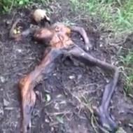 【女死体】ジャングルでカピカピのミイラ状態になった女の死体が裸だけど抜けない件 動画、閲覧注意