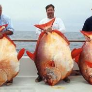 【偽造】酷すぎる食品偽造・・・魚に脂肪注射して大きくしてる・・・