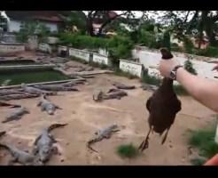 【残酷】生きたアヒルをワニの群れに投げれる動物園に行ってみた・・・
