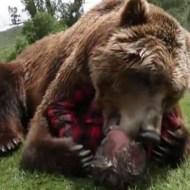 【閲覧注意】熊が生きてる人間の顔を噛み千切ってるんだが・・・