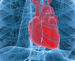 【閲覧注意】心臓の動きがこんなに分かる動画はない・・・※グロ動画
