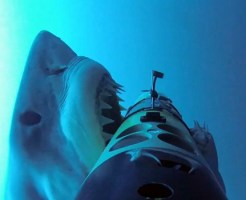 【ショッキング】人食い鮫の恐怖が良く分かる神映像・・・