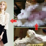 【閲覧注意】女性ってウサギの毛皮着るけどこれ見ても平気なの?