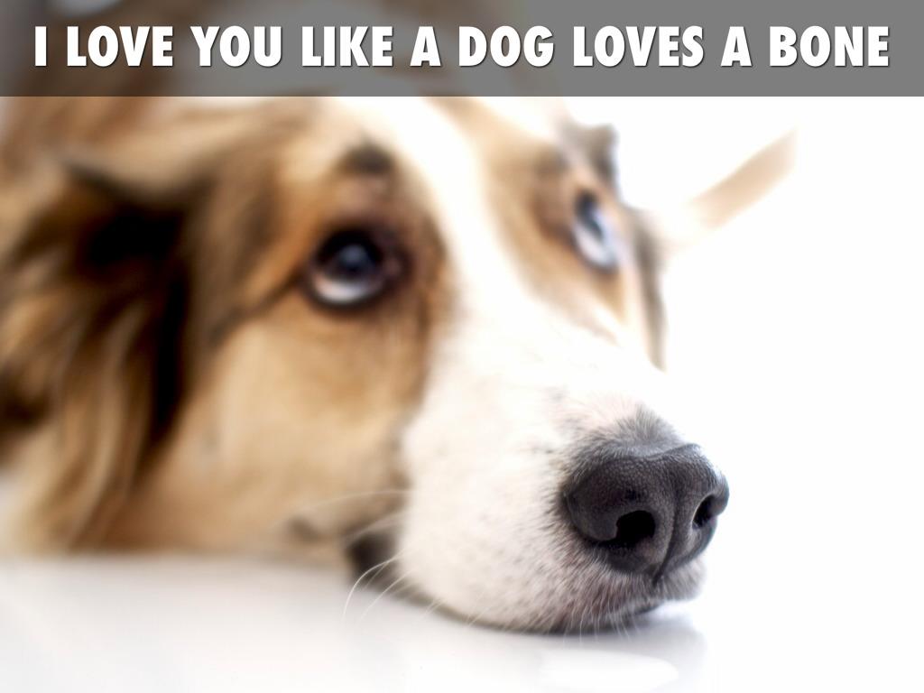 Serene Owl Loves Books Oh How I Love Let Me Count By Ava Knauff I Love You Dog Earrape I Love You Dog Vine Full I Love You Like bark post I Love You Dog