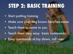 Small Of How To Teach Your Dog To Roll Over