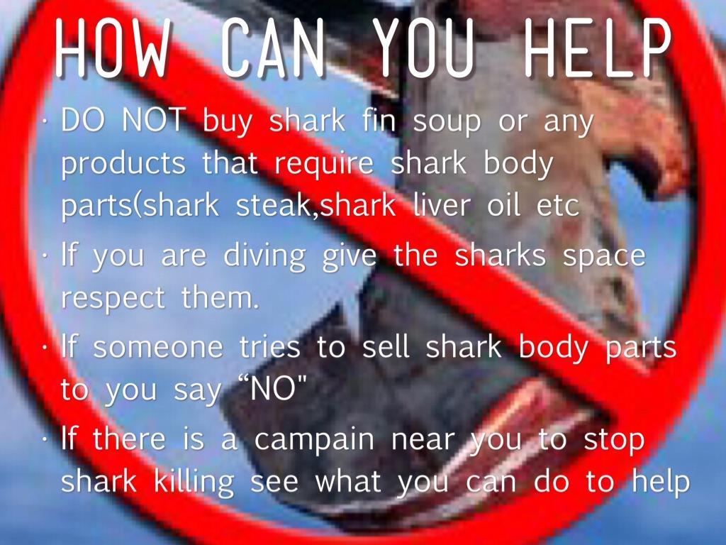 Hammerhead Sharks By Emu Lord