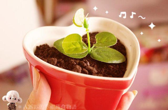 【料理大變身】這盆栽真的可以吃!用榛果可可亞做出時髦點心~盆栽蛋糕
