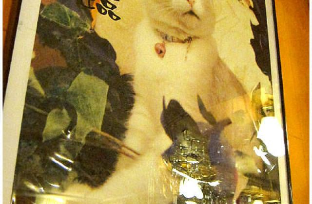 【台北】寵物餐廳.芝山小貓花園(葷素
