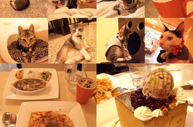 【新北】可愛的貓肉球部隊~被攻陷啦!野貓中途咖啡(葷素