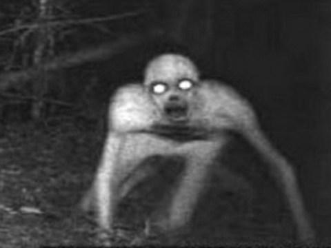【H,エロ画像】(回覧注意)動きに反応する自動カメラに映った恐ろしいもの・・・(画像15枚)