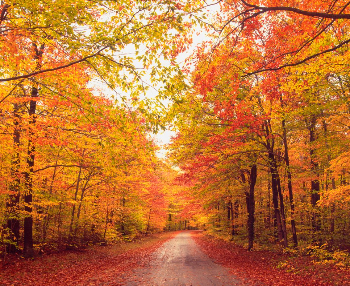 Upstate New York Fall Hd Wallpaper Don T Apologize For Your Obsession With Fall It S Science