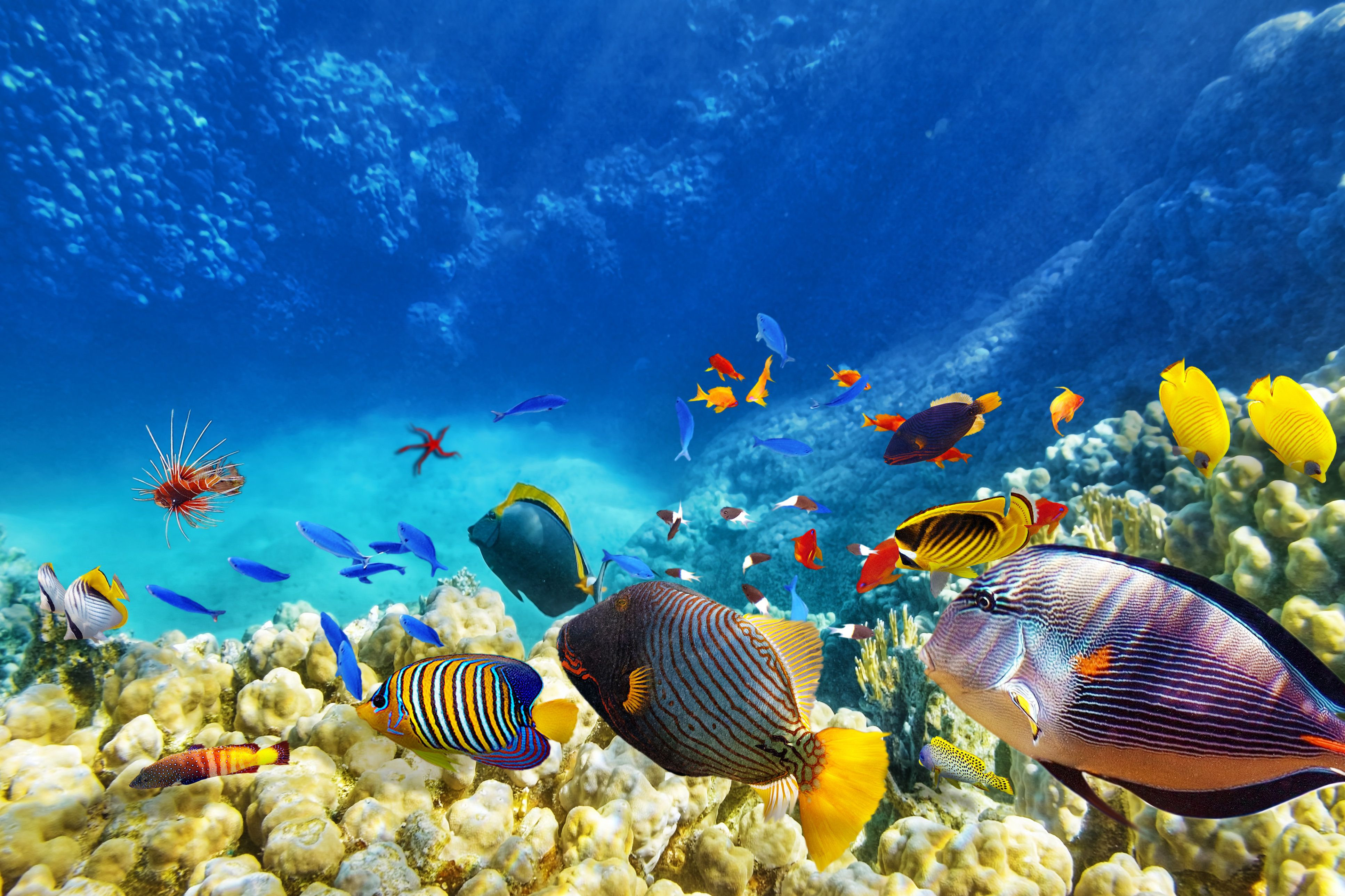 Animated Aquarium Wallpaper For Windows 8 Save The Reefs How To Preserve The Caribbean S Underwater