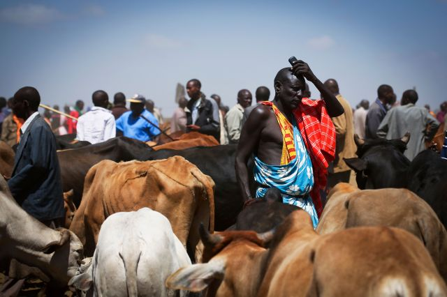 "<span class='image-component__caption' itemprop=""caption"">A Maasai man holds his cell phone amid his cattle on market day in Suswa, Kenya. With solar power, these mobile services are available to people in even the most remote parts of Kenya.</span>"