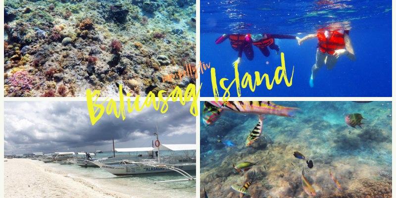 薄荷島跳島行程 | 巴里卡薩島Balicasag Island 浮潛餵魚,原來海裡這麼美!