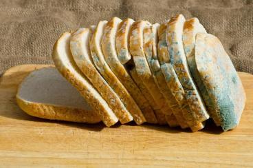 Resultado de imagem para pão bolorento