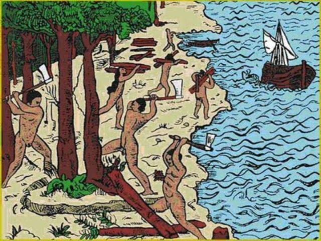 9 curiosidades sobre o pau-brasil, a árvore que dá nome ao nosso país 9 curiosidades sobre o pau-brasil, a árvore que dá nome ao nosso país 03162651808044