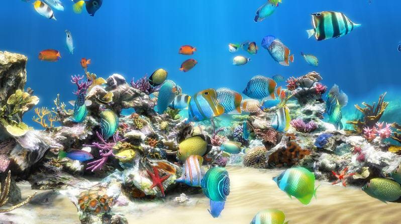 Hd Live Wallpaper For Tablet Live Aquarium Hd Software Informer Screenshots