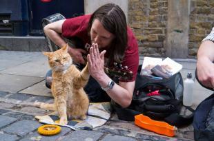 用感激的心,去看待自己的每一天。—《遇見街貓 Bob》—我們用電影寫日記