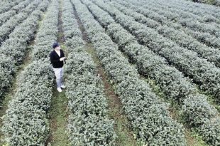 「看完好想去宜蘭!」台灣人也不一定知道的宜蘭秘境! – 深度農業之旅 – 冒牌生輕旅行