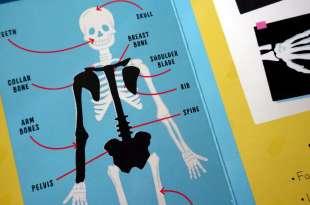70個刮刮看|Scratch and Learn Human Body|我的身體刮畫書|還有《身體標籤書》
