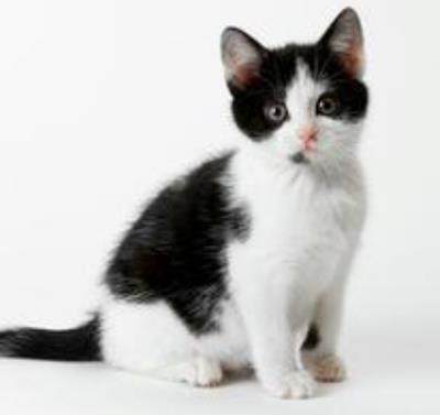 貓能吃奶油嗎 貓不適應奶油中的乳糖 - 愛寵物咨詢網