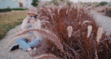 康橋河濱公園 || 台中大里景點,隱藏在公園內的浪漫魅力紫色狼尾草席捲IG景點版面,網美必來景點之一!