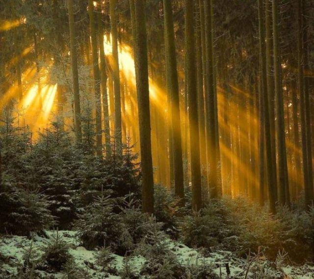 Cute Dog Memes Wallpaper Beautiful Mysterious Forests 22 Pics Izismile Com