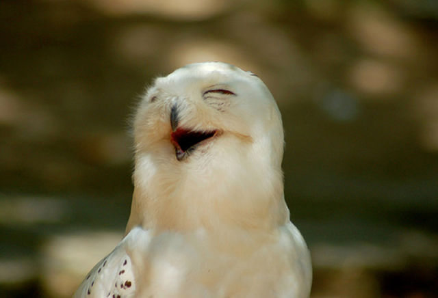 Cute Wallpapers For Facebook Profile Picture For Girls With Quotes Funny Owls That Are Laughing 35 Pics Picture 29