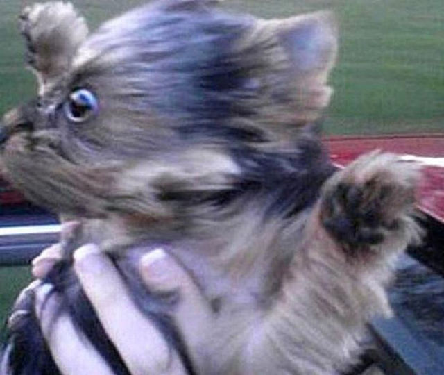 Cute Dog Memes Wallpaper Funny Flying Dog Faces 50 Pics 1 Gif Izismile Com