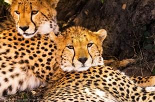 【圓滿成功!】室內講座-自然奇蹟 動物大遷徙-攝影行旅完全公開