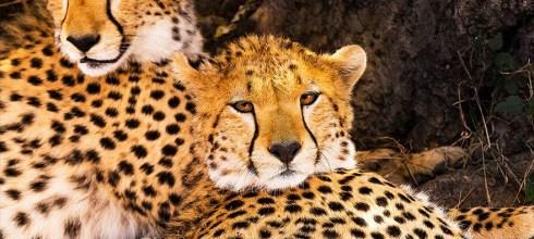 【室內講座】自然奇蹟 動物大遷徙-攝影行旅完全公開